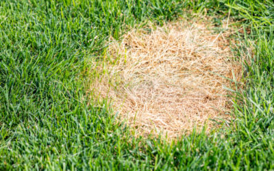 Treating and Preventing Brown Patches in Your Grass